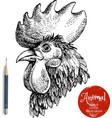 Hand drawn rooster head  Sketch chicken portrait vector image vector image