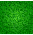 Green grass background vector image