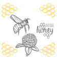 hand drawn bee and clover over white background vector image