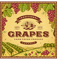 Vintage grapes label vector image