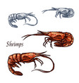 shrimp prawn seafood isolated sketch icon vector image vector image