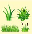 green grass nature design elements vector image
