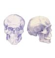 Drawing skulls and bones vector image