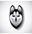 siberian wolf design vector image