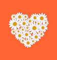 spring heart frame with blooming chamomile vector image