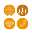 Barley icon design vector image