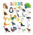 different kind of birds Cute cartoon birds vector image