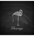 a chalk flamingo on the blackboard texture vector image