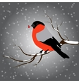bullfinch sitting on branch with a twig of Rowan vector image