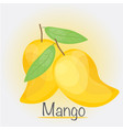 yellow mango vector image