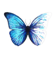 Butterfly Morpho Anaxibia vector image