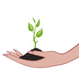 growing green plant in palm as a symbol of nature vector image