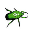 Green beetle vector image