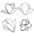 Set of magnolia flowers vector image
