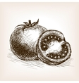 Tomato sketch style vector image
