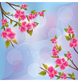 Background with sakura blossom Japanese cherry vector image vector image