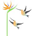 Hummingbird vector image