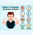 best foods for muscle growth infographic vector image