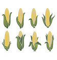 corn images set vector image