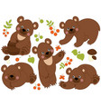 set of cute forest brown bears vector image