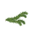 the spruce branch vector image