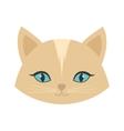 beauty face cat female blue eyes vector image