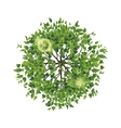 summer tree top view vector image
