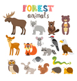 Set of cute forest animals in Woodland Cartoon vector image