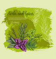 herb and spice with fresh leaf sketch poster vector image
