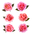 Set of beautiful pink roses vector image vector image