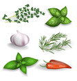 set of fresh herbs seasonings and spices on a vector image