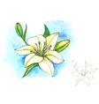Watercolor and line-art lily vector image