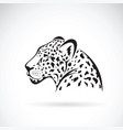 leopard on white background wild animals vector image