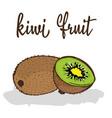 kiwi fruit vector image