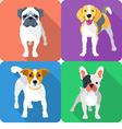 set dog icon flat design vector image