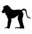 baboon vector image
