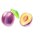 Color pencils - sweet peach vector image