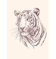Tiger hand drawn vector image