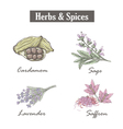 Skech spice and herbs Set vector image