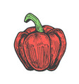 Hand drawn of red pepper sketch style doodle vector image