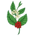 coffee tree icon vector image vector image