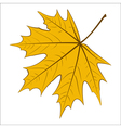 Yellow Maple Leaf vector image vector image