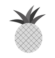fruit icon image vector image