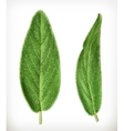 Salvia leaves icons vector image