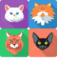 Set icon cats flat design vector image