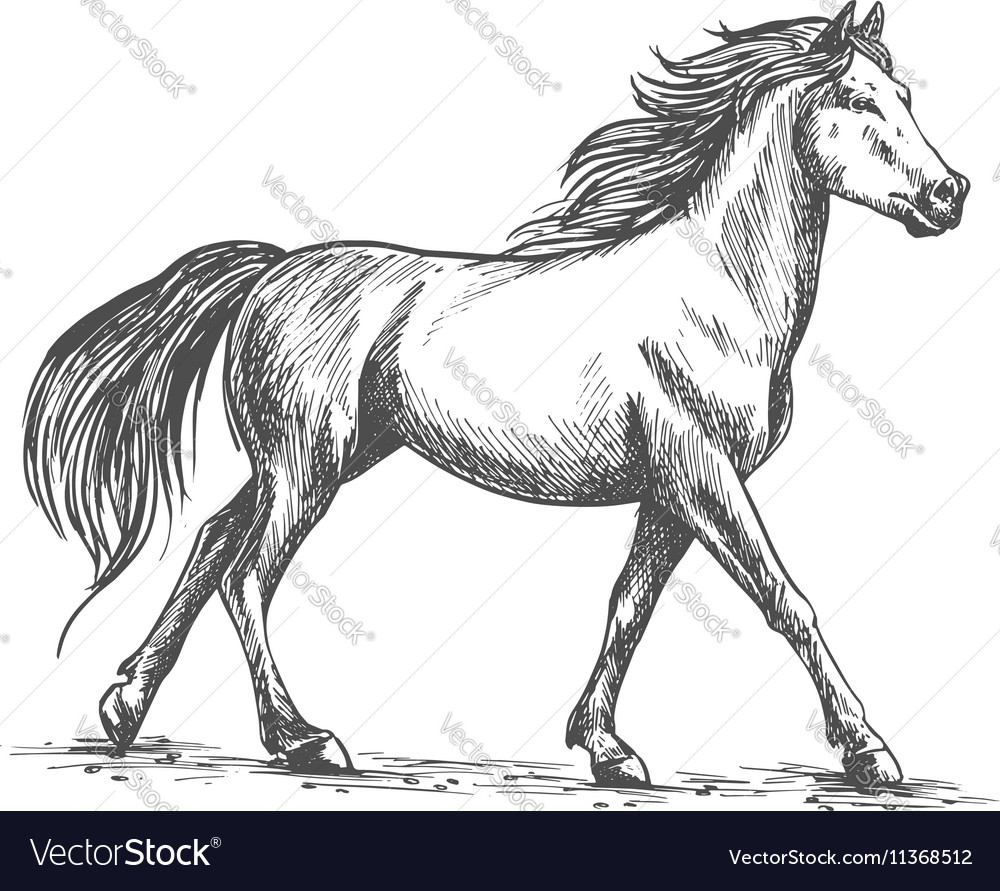 White horse walks gracefully vector
