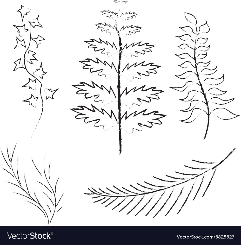 Various branches drawn in pencil and charcoal vector
