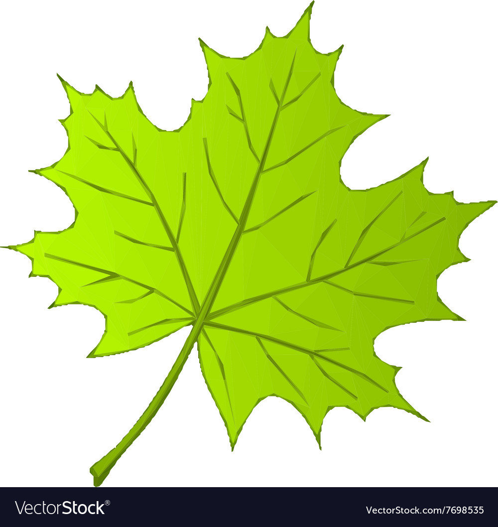 Summer maple leaf low poly vector