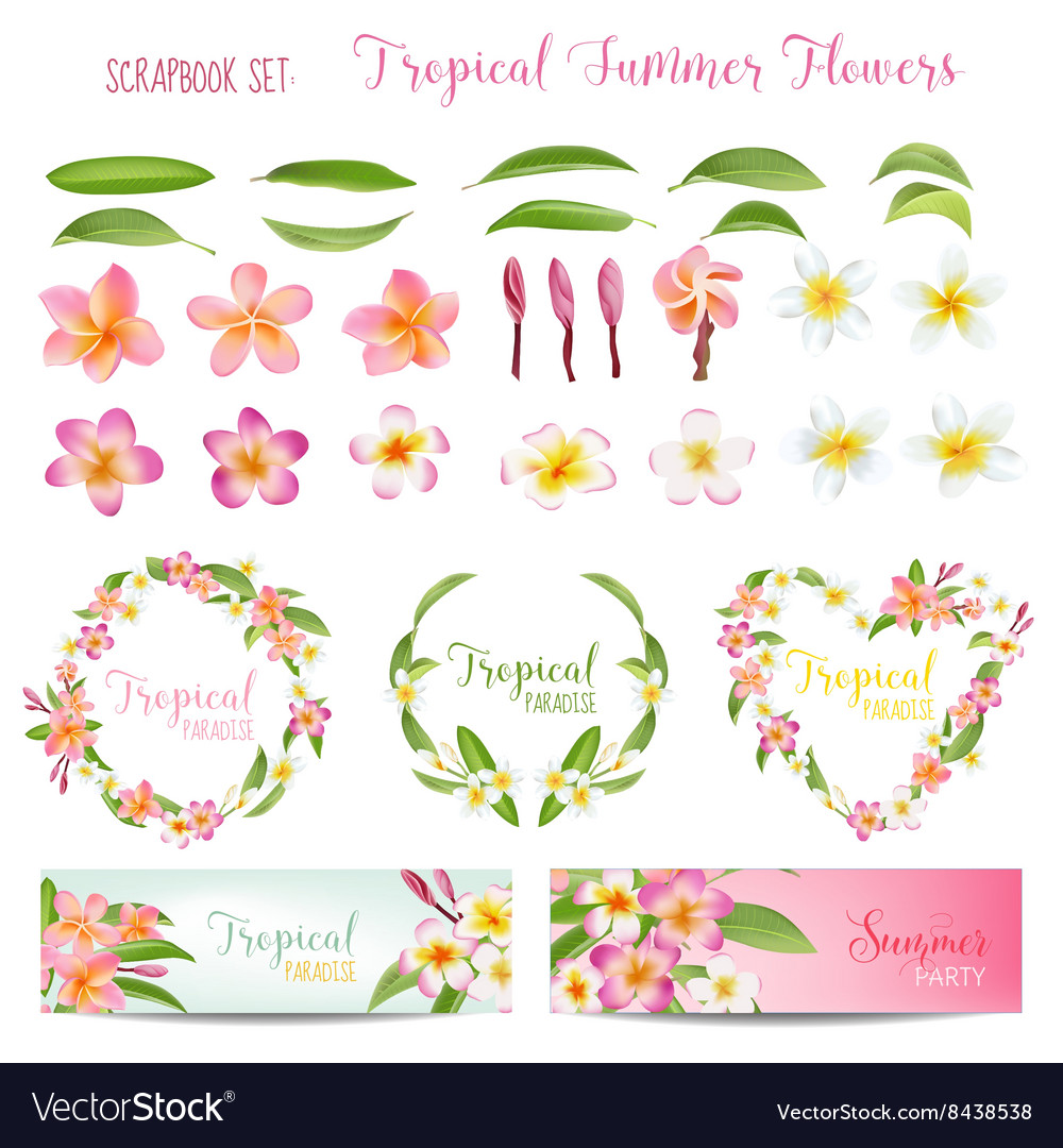 Tropical flowers and leaves set exotic plumeria vector