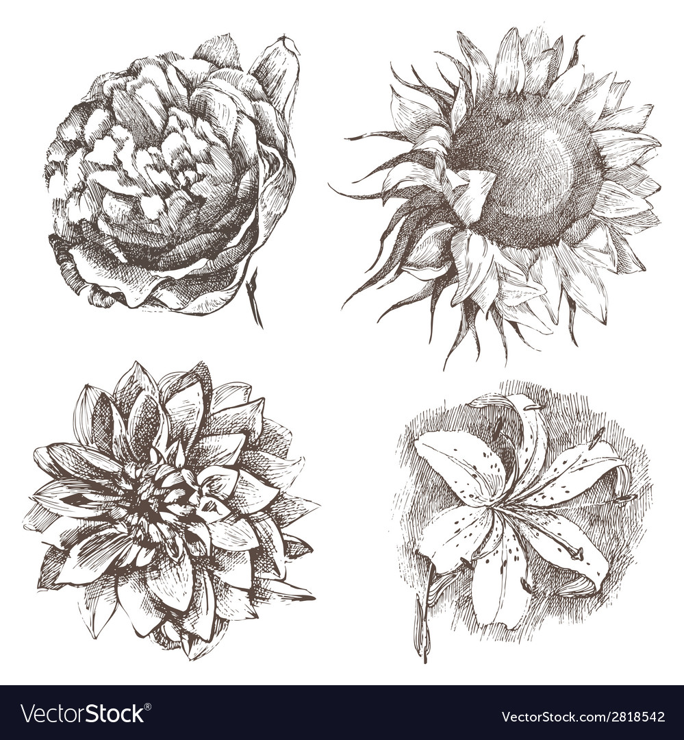 Hand drawn flowers vector